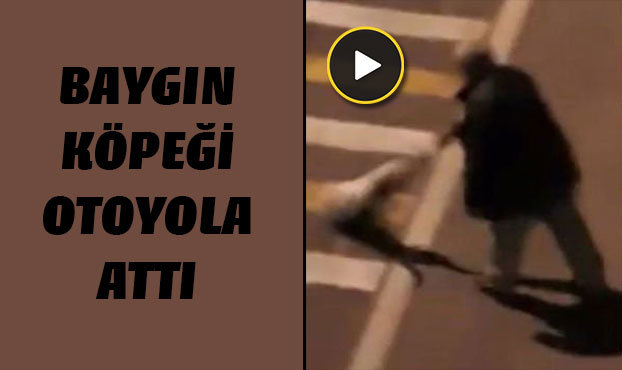 Giresun'da bir kişi baygın köpeği otoyola böyle attı